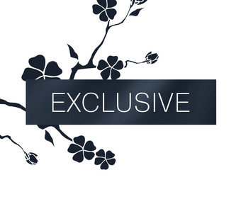 Collection «Exclusive»
